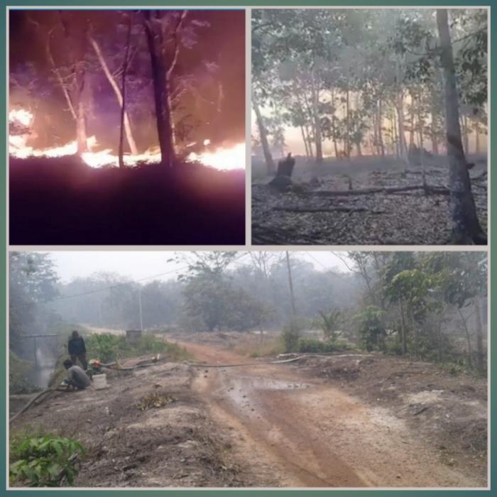 Dampak Musim Kemarau, Puluhan Hektar Lahan Di Kecamatan Buru Terbakar