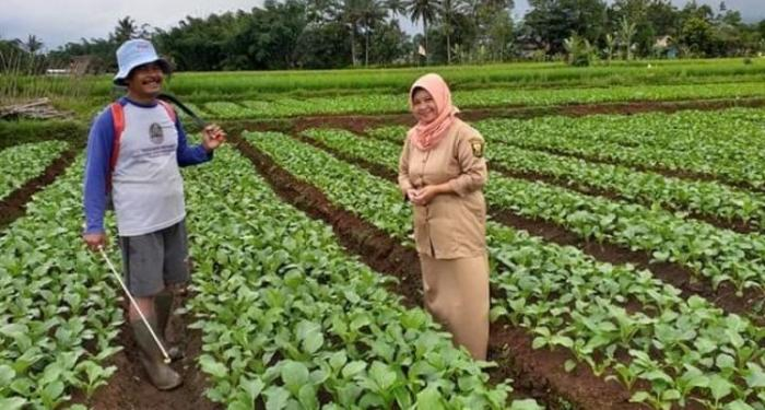 Medan Tempur Pertanian Dimulai dari Kecamatan, Kopassusnya dari BPP