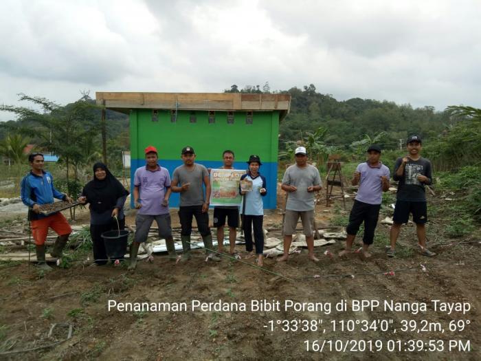 Porang Komoditas Baru Yang Sangat Menggiurkan Di Kabupaten Ketapang Kalimantan Barat