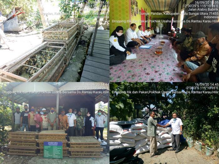 Dropping Itik Dan Pakan Di Kelompok Ternak Usaha Bersama Ds. Rantau Karau Hilir Pada Kegiatan Pengembangan Pembibitan Dan Pakan Ternak