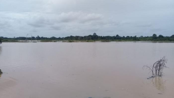 Pertanian Terdampak Banjir, Kementan Siapkan Bantuan untuk Kalsel