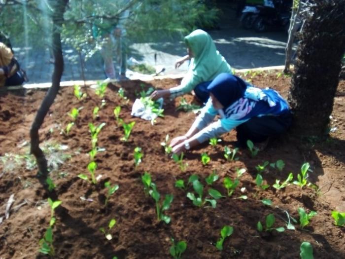 Pemanfaatan Lahan Pekarangan Di Lingkungan Kantor Kecamatan Waru Kabupaten Pamekasan