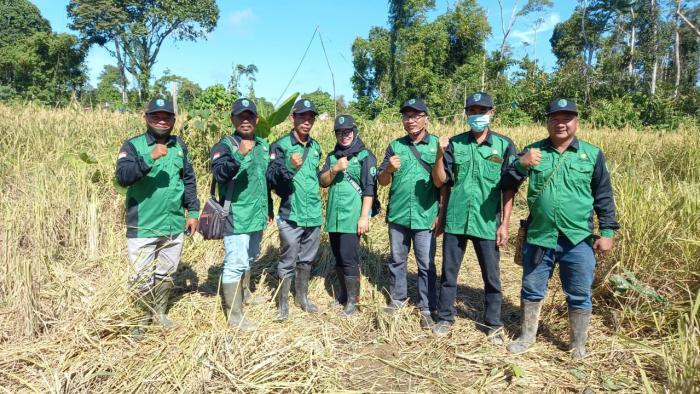 Prospek Padi Ladang Di Wilayah Perbatasan  Kecamatan Sebuku