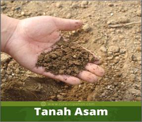Cara Mengatasi Tanah Masam Agar Tanaman Kita Dapat Tumbuh Sesuai Yang Diinginkan