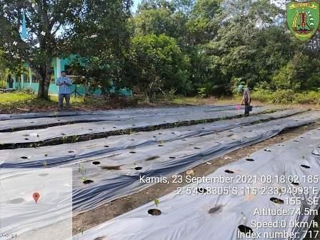 pembuatan kaji terap komoditas hortikultura balai penyuluhan pertanian kecamatan Paju epat kabupaten Barito timur KALTENG