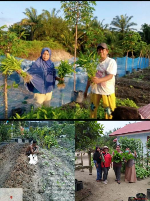 P2L Jadi Solusi kebutuhan Pangan di Kecamatan Pinggir Kabupaten Bengkalis