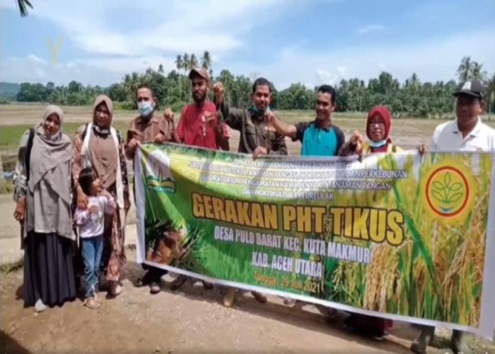 Penyuluh Pertanian Kabupaten Aceh Utara Kawal Terus Produksi Pangan melalui Gerakan PHT Tikus