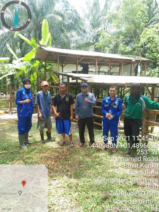 PPL Desa Bukit Kerikil Dampingi Tim Pemeriksa Kesehatan Ternak Kecamatan Bandar Laksamana, Bengkalis